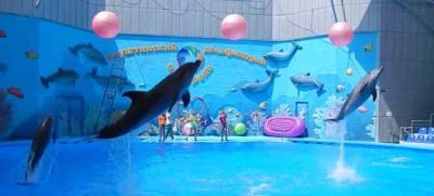 Дельфинарий зимой