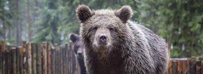 карелия Зоокомплекс «Три медведя»