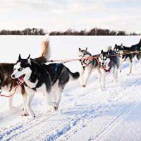 катание на собачьих упряжках в Кузьминках