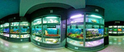 Морской аквариум-музей