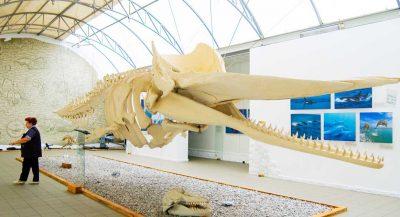 Музей Мирового океана2