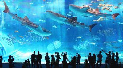 Музей Мирового океана4