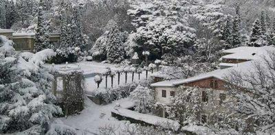 Никитский ботанический сад зимой ялта