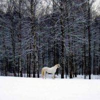 петербург Удельный парк зимой