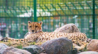 Ярославский зоопарк2