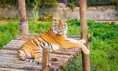 Зоопарк калининград