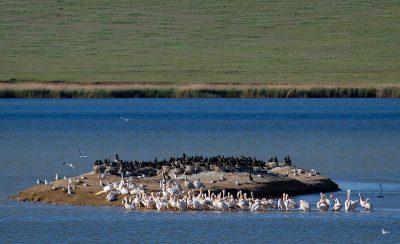 Остров Водный на озере Маныч-Гудило
