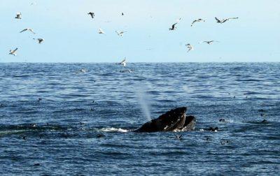 Охота на китов с фоторужьем