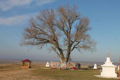 Одинокое дерево и ступа Калачакры